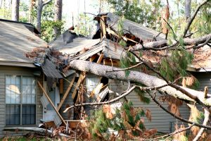 Roof of house destroyed by tree that fell on it.