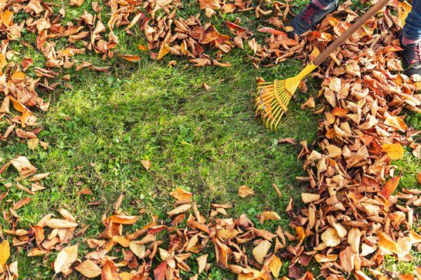 Raking orange and yellow leaves